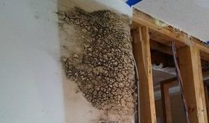 Mold Infestation Caused By Ceiling Leak